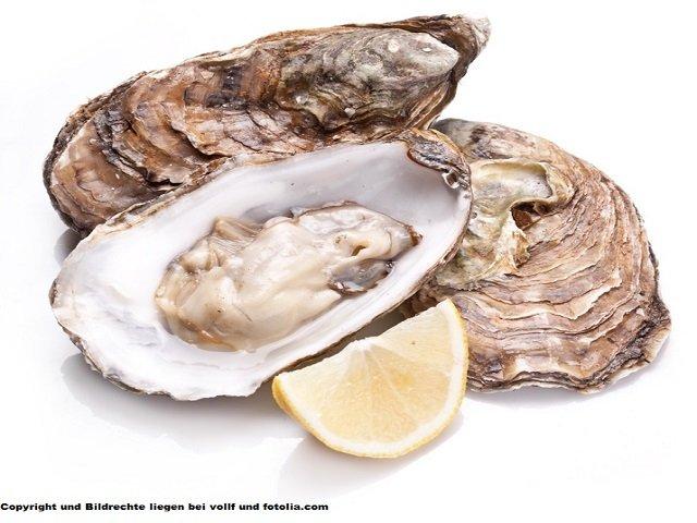 Korb - 12 Austern Fines de claires Austern
