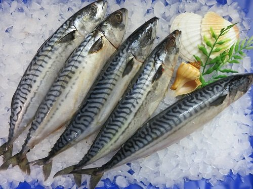 Makrele küchenfertig 1200g